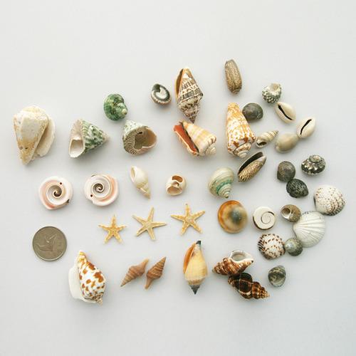 [아트공구][유니네2865]5000 만들기조개세트